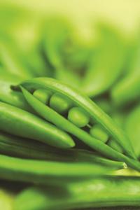 greenpod